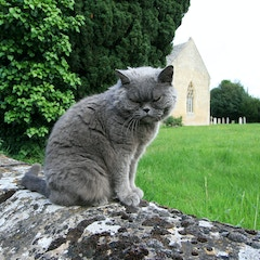 Church Cat
