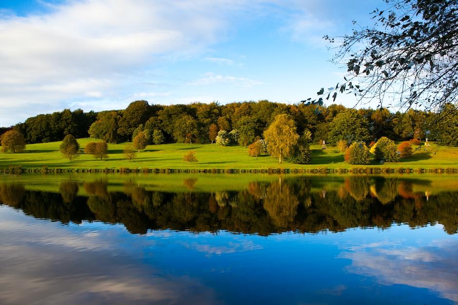 Reflective Landscape