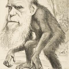 Charles Darwin as an Ape (1871)