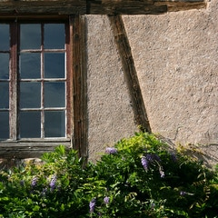 Village Window and Flowers