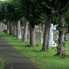 Tree-Lined Path Through Churchyard