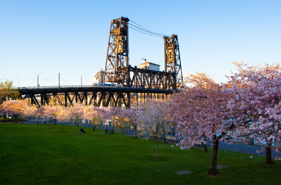 Steel Bridge with Cherry Blossoms