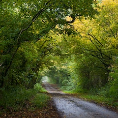 Road Near the Birthplace of Jane Austen