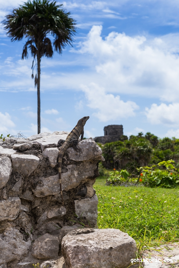 Lizard on the Ruins (Tulum, Mexico)