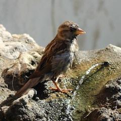 Bird bath in the Alcazar Gardens, Sevilla, Spain