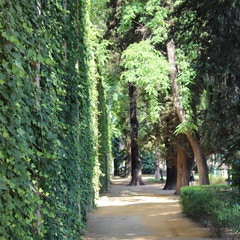 Alcazar Gardens, Sevilla, Spain