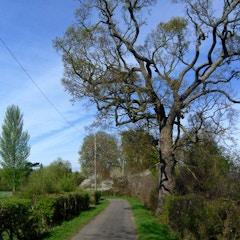 The Lane to Binsey Church