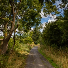 Hadrian's Wall Path near Corbridge
